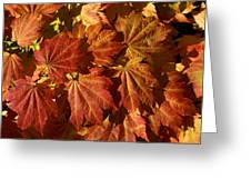 Autumn Leaves 00 Greeting Card