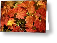 Autumn Leaves 01 Greeting Card