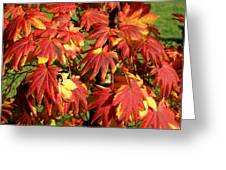 Autumn Leaves 07 Greeting Card