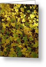 Autumn Leaves 091 Greeting Card