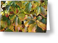 Autumn Leaves 79 Greeting Card