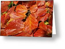 Autumn Leaves 80 Greeting Card