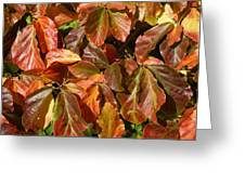 Autumn Leaves 81 Greeting Card