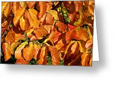 Autumn Leaves 82 Greeting Card