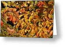 Autumn Leaves 83 Greeting Card