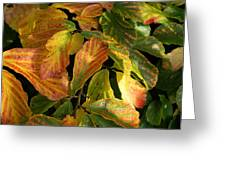 Autumn Leaves 91 Greeting Card