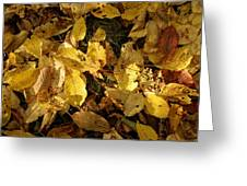 Autumn Leaves 95 Greeting Card