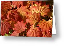 Autumn Leaves 98 Greeting Card