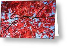 Autumn Leaves And Blue Sky Greeting Card