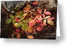 Autumn Leaves And Needles Greeting Card