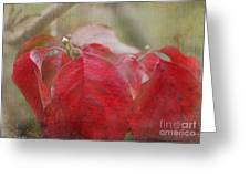 Autumn Leaves Blank Greeting Card Greeting Card