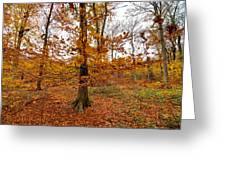 Autumn Leaves Common Wood  Greeting Card