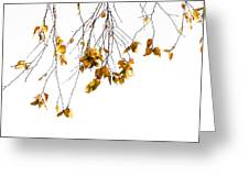 Autumn Leaves Hanging From Branch Greeting Card