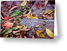 Autumn Leaves In Creek Bed Greeting Card