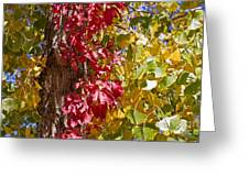 Autumn Leaves In Palo Duro Canyon 110213.97 Greeting Card