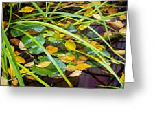 Autumn Leaves In Pond Greeting Card