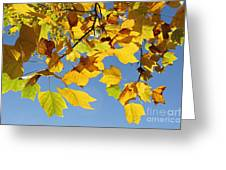 Autumn Leaves Of The Tulip Tree Greeting Card