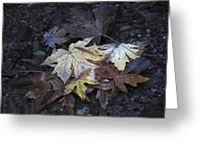 Autumn Leaves Submerged In Pescadero Creek Greeting Card