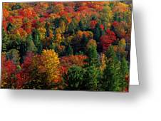 Autumn Leaves Vermont Usa Greeting Card
