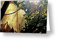 Autumn Light On Leaf Greeting Card