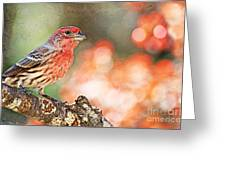 Autumn Male House Finch 1 Greeting Card