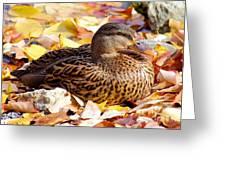 Autumn Mallard Greeting Card
