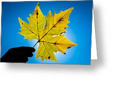 Autumn Maple Leaf In The Sun Greeting Card