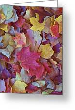Autumn Maple Leaves - Phone Case Greeting Card