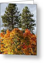Autumn Maple With Pines Greeting Card