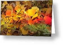 Autumn Masquerade Greeting Card by Martin Howard