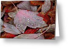 Autumn Melange Greeting Card