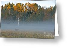 Autumn Mist Greeting Card