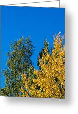 Autumn Mix - Featured 3 Greeting Card