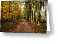Autumn Mood In The Forrest Greeting Card