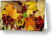 Autumn Moods 19 Greeting Card