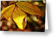 Autumn Moon Greeting Card by JAMART Photography