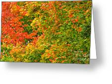Autumn Mosaic Nj Greeting Card