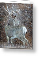 Autumn Muley Greeting Card