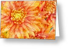 Autumn Mums Greeting Card by Heidi Smith