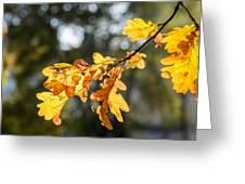 Autumn Oak Leaves Greeting Card