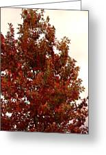 Autumn Oak On A Cloudy Day Greeting Card