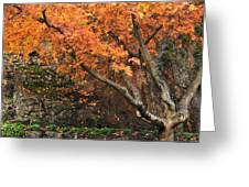 Autumn Of My Life Greeting Card