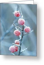 Autumn Olive Elaeagnus Umbellata Greeting Card