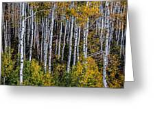 Autumn On Mcclure Pass Greeting Card