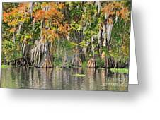 Autumn On The St. Johns Greeting Card