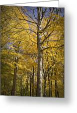 Autumn Orange Forest Colors At Hager Park No.1189 Greeting Card