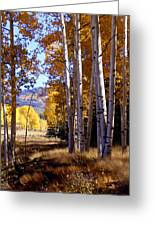 Autumn Paint Chama New Mexico Greeting Card