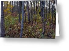 Autumn Panorama Greeting Card