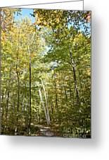 Autumn Pathway Greeting Card