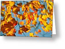 Autumn Petals Greeting Card by JAMART Photography